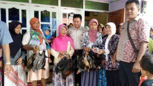 Masyarakat Brebes Pelihara Ayam untuk meningkatkan kesejahteraan.